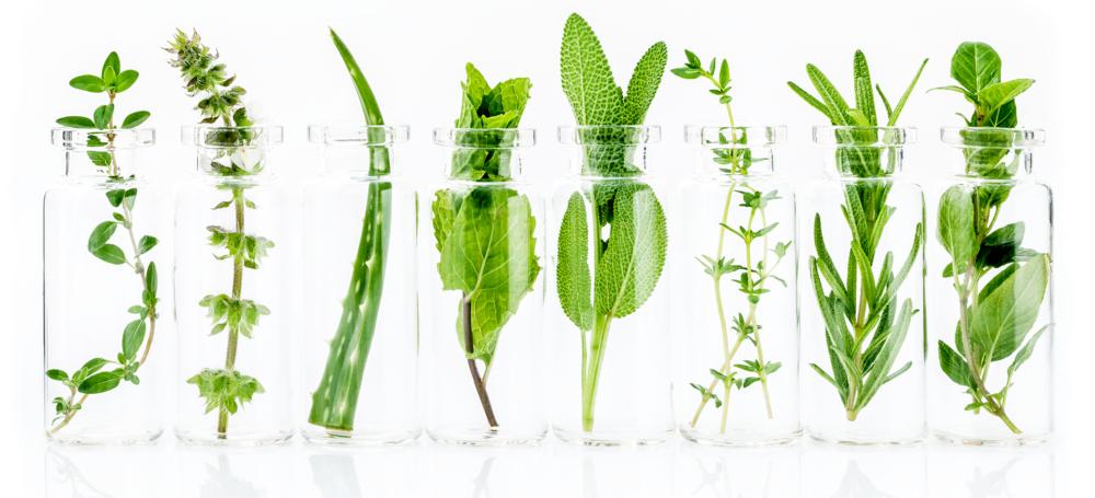 herbs_header